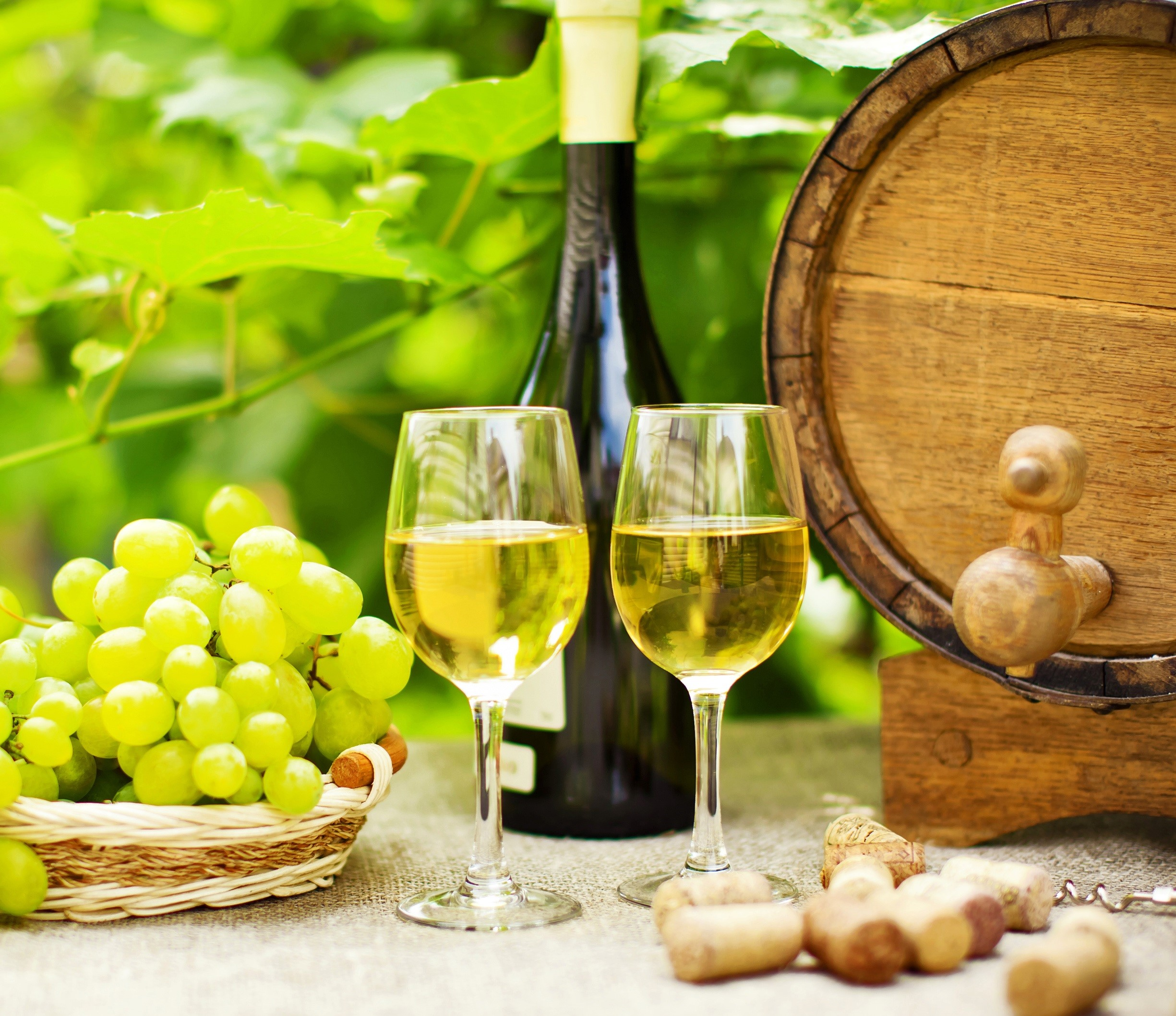 Curso de Viticultura, enología y cata